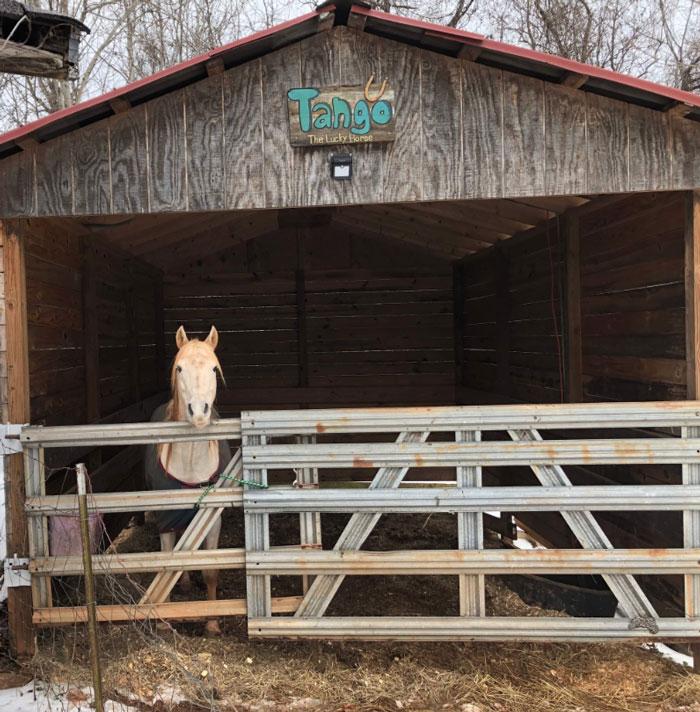 蠢度无下限的马「躺着才能睡觉」 主人QQ:我到底养了什幺马